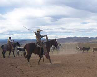 Ranch Roping Events Be Line Equestrian Center Be Quick