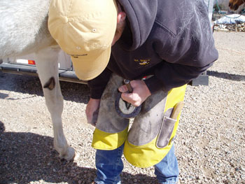 Be Quick Feed & Farrier